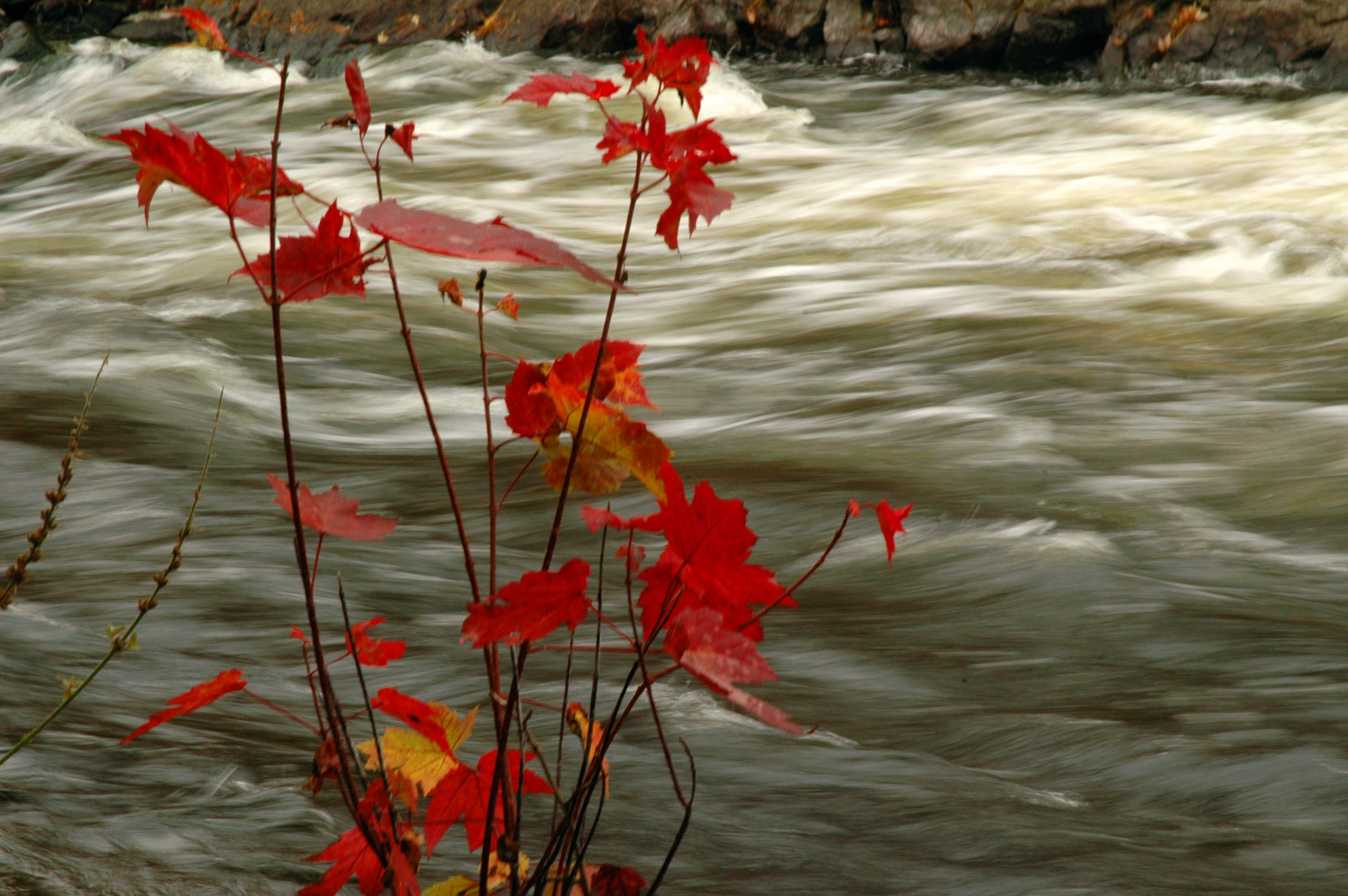 Raging river, fall leaves, near Blakeney, ON