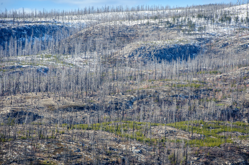 The barren rock of Okanagan Mountain rises above the forests east of Okanagan Lake between Penticton and Kelowna. Some of the higher forests have seen fire damage in past years. This view was taken from Chute Lake Road. (Richard McGuire photo)