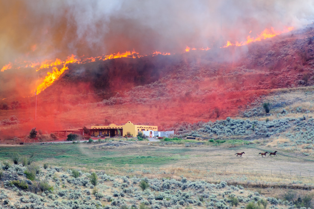 As red fire retardant settles onto a strip of land between a large house and the approaching fire, horses run in fear around the field below. The wildfire occurred Aug. 19, 2013 near Spotted Lake west of Osoyoos. (Richard McGuire photo)