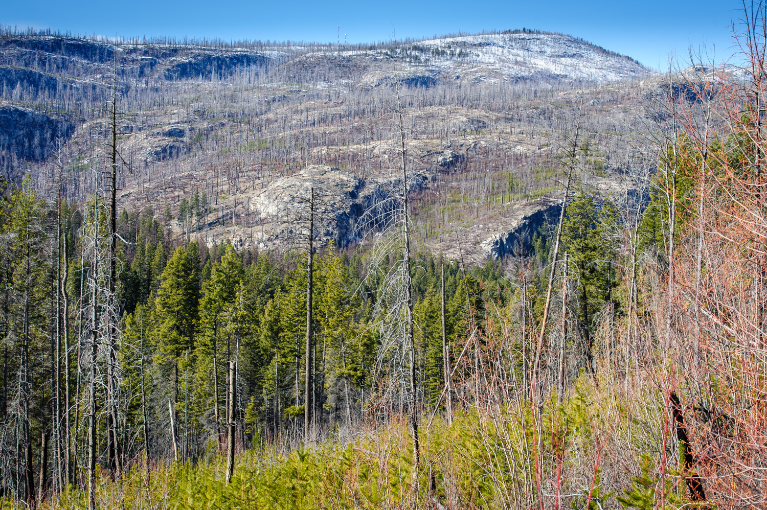 Okanagan Mountain Provincial Park